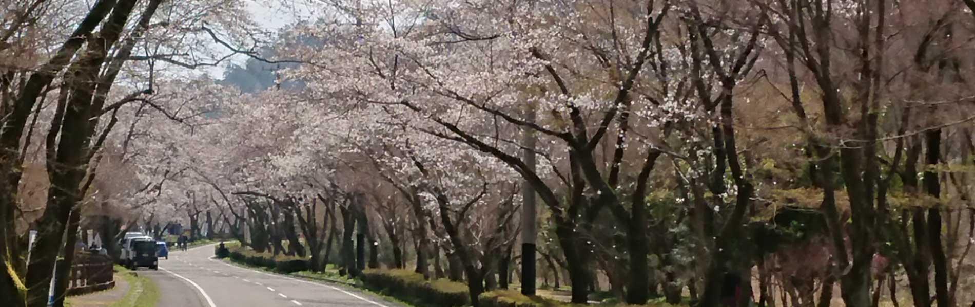 岐阜県のイメージスライド画像 鵜飼